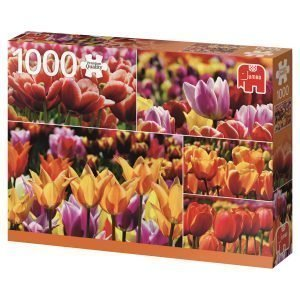Jumbo Holland Tulips 1000 Palaa