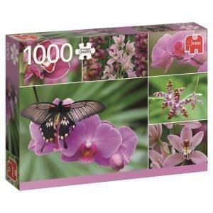 Jumbo Orchids 1000 Palaa