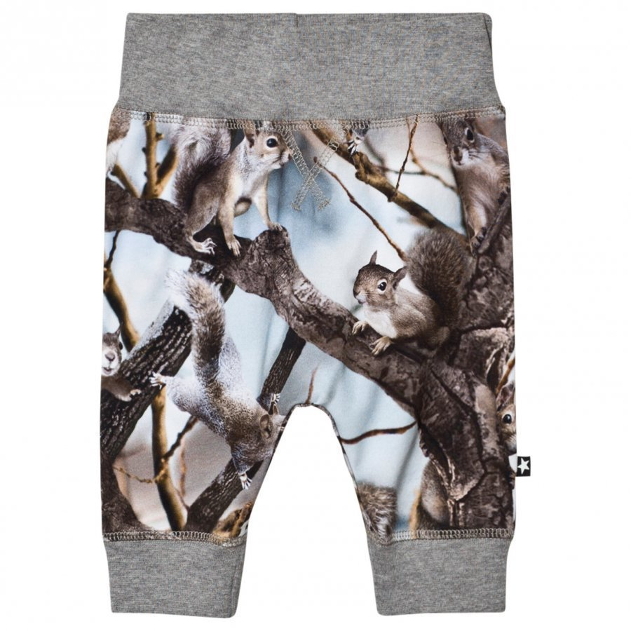Molo Sammy Soft Pants Squirrels Verryttelyhousut